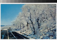Winter scene, Blue Ridge Parkway, North Carolina, circa 1955-1968