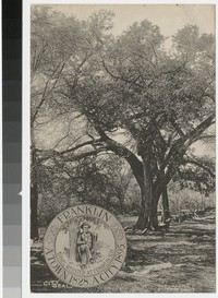 Old elm tree at Daniel Webster's birthplace, Franklin, New Hampshire, 1917