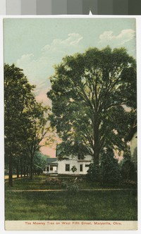 Mowrey Tree, Marysville, Ohio, 1907-1914
