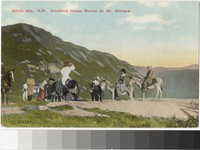 Crawford House burros on Mt. Willard in the White Mountains, New Hampshire, 1907-1914