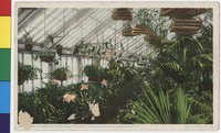 Mrs. Roosevelt's orchid collection, White House conservatories, Washington, D.C., 1907-1914