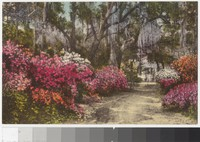 "The Driveway to ""The Postern"" in Summerville, South Carolina, 1907-1914"
