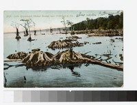 Lake Drummond, Dismal Swamp, near Norfolk, Virginia, 1907-1908