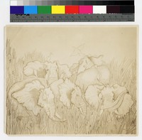 """Photographic reproduction of silverpoint showing five elephants in tall grass -- (7"""" x 8 1/2"""". Black and white. Silverpoint by Thelma Wood)"""