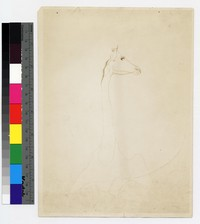 """Photograpic reproduction of silverpoint showing giraffe -- (9 1/2"""" x 6 3/4"""". Black and white. Silverpoint by Thelma Wood)"""