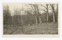 WPA Project No. 34, Improvements Keelty Tract, Baltimore, Maryland, November 5, 1935