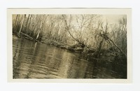 Clearing Pocomoke river, near Powellville, Wicomico County, Maryland, November 15, 1935