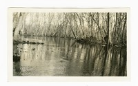 Clearing Pocomoke river, near Powellville, Wicomico County, Maryland, November 29, 1935