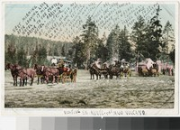 Wylie Permanent Camp, Yellowstone National Park, 1907-1914