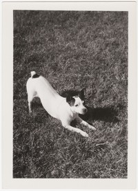 Dog, Fort Washington, Maryland, March 30, 1936