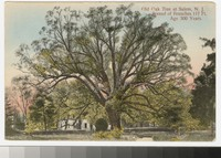 Old oak tree, Salem, New Jersey, 1907-1910