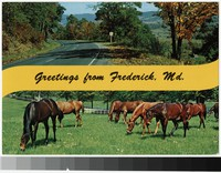 Greetings from Frederick, Maryland, 1971-1984